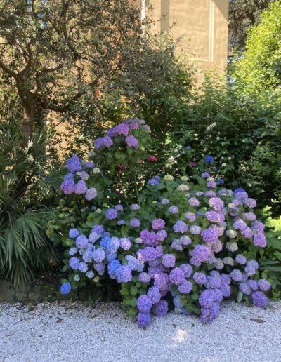 giardino e fiori